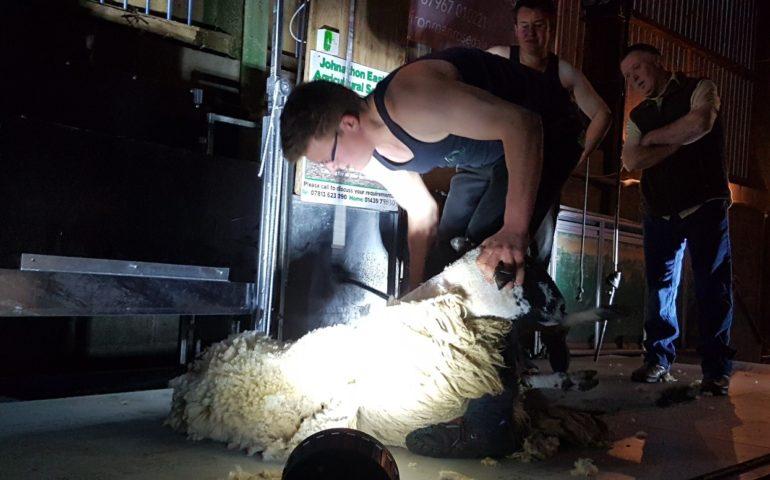 Swede Shear Coultas Farm Great Habton