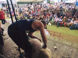 Swede Shear 2019 @ Coultas Farm